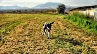Το σκυλακι που το λένε Δερβίση