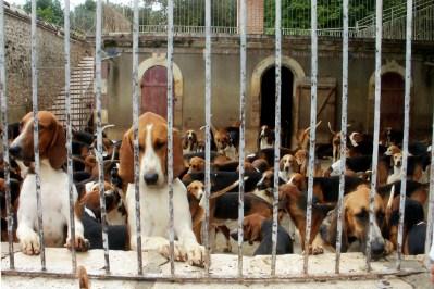 Câinii de vânătoare