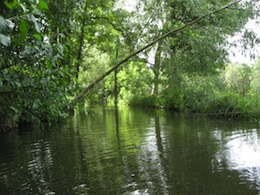 Das Naturerholungs-Erlebnis Spreewald