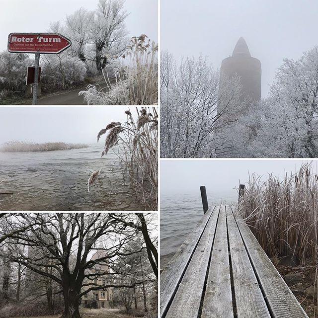Der Nebel hatte den Montag fest im Griff, verwandelte die Natur in eine wunderschöne Winterlandschaft ️ #muldestausee #ferienhaushalbritter #ferienhauspouch #pouch #winter #nebel #frost #goitzsche