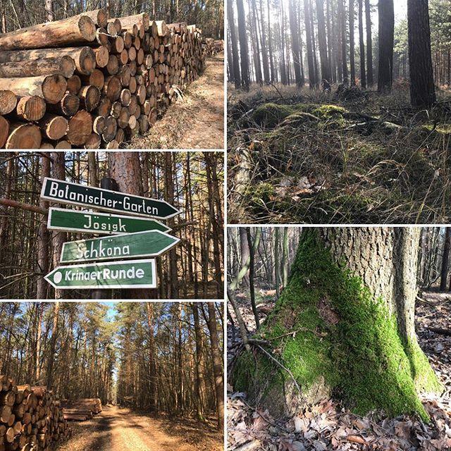 Wald, Wald und nochmal Wald 🌳🌳🌳. Wer Ruhe, Natur und Bäume liebt, ist in Krina genauso richtig 🏼. #ferienhauskrina #krina #muldestausee #ferienhaushalbritter #wald #ruhe #waldspaziergang #erholung #urlaub
