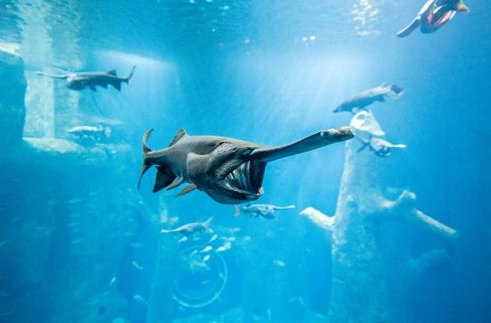 Aquatis Aquarium-Vivarium, Lausanne ©Nuno Acácio