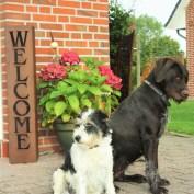 Hunde sind bei uns im Backhaus WIllkommen