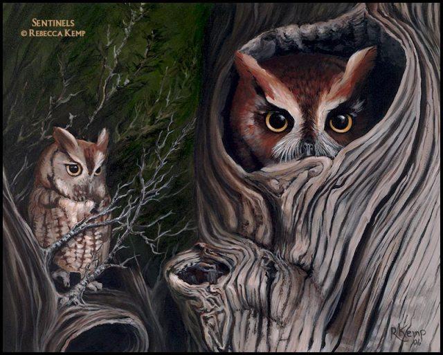 Sentinels - Eastern screech owls