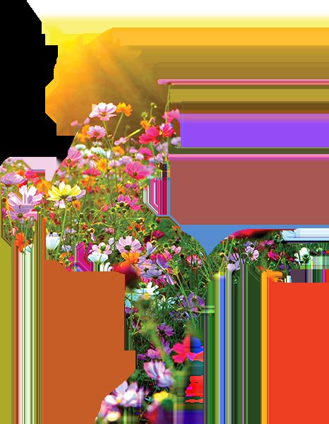 Field of Flowers Unicorn