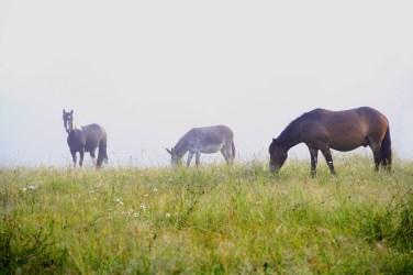 rando cheval bordeau