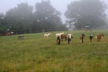équitation gironde