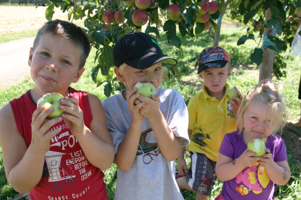 Autocueillette des pommes - La Ferme Genest