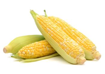 Autocueillette des maïs - La Ferme Genest