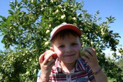 Autocueillette pommes