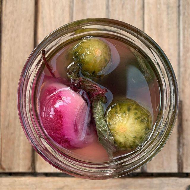Fermentierte saure Gurken mit roten Shisoblättern