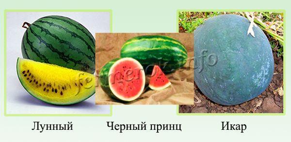 görögdinnye illata a szájból)