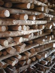 madera de boj