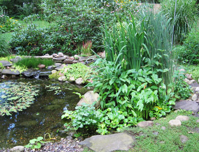 The Wetlands Garden Natural Landscaping Gardening And
