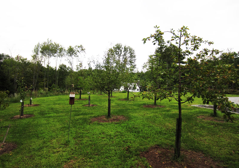 Fruit Tree Orchard and Berry Patch Installation  Natural