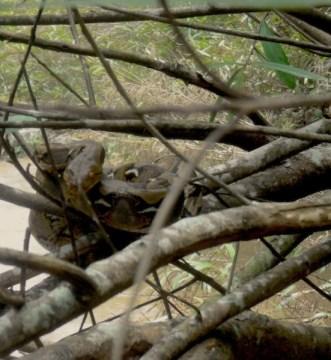Beim Rafting in Thailand entdecken wir eine Schlange am Flussufer