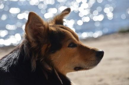 Die vielen Hunde in Colonia sind auch chillig