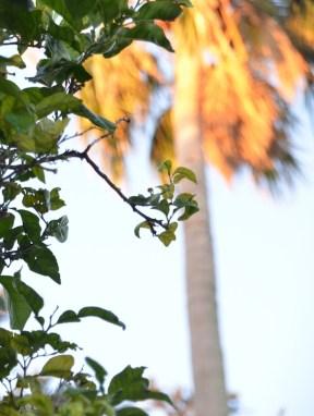 Die goldene Palme