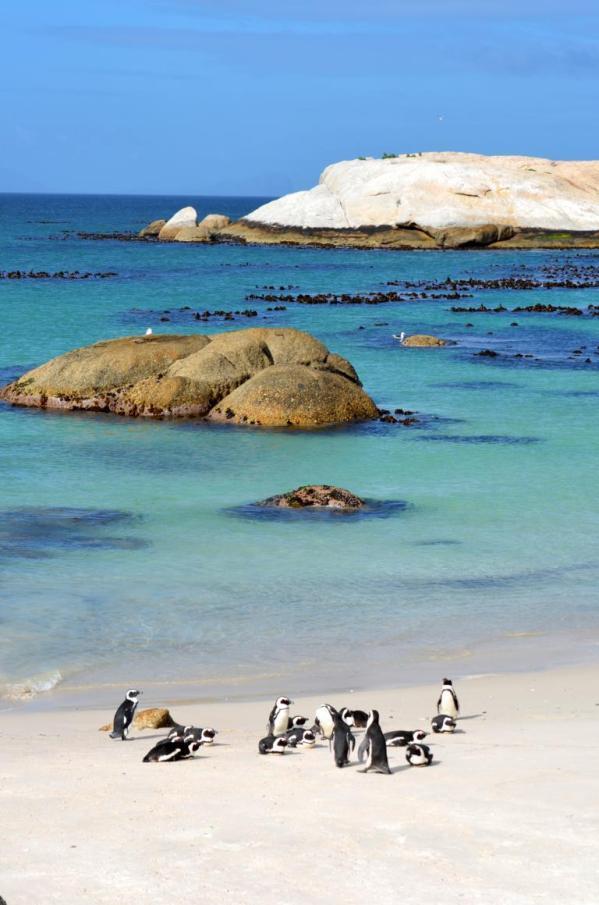 Pinguine in Simons Town: Ein Highlight auf meiner Rundreise durch Südafrika