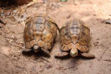 Schildkröten in Nungwi - Backpacking Sansibar Rundreise