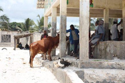 Authentisches Dorf Matemwe auf Sansibar - Backpacking-Tipp