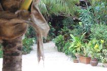 Seles Bungalows Matemwe - tolle Unterkunft für Sansibar Rundreise