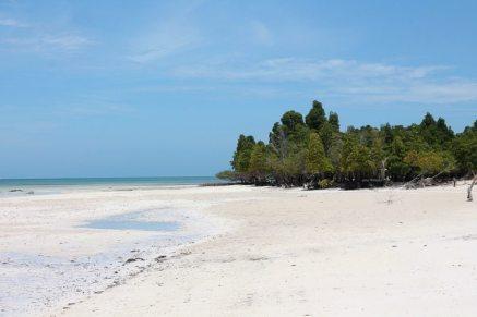Mangroven auf Sansibar in Michamvi Kae