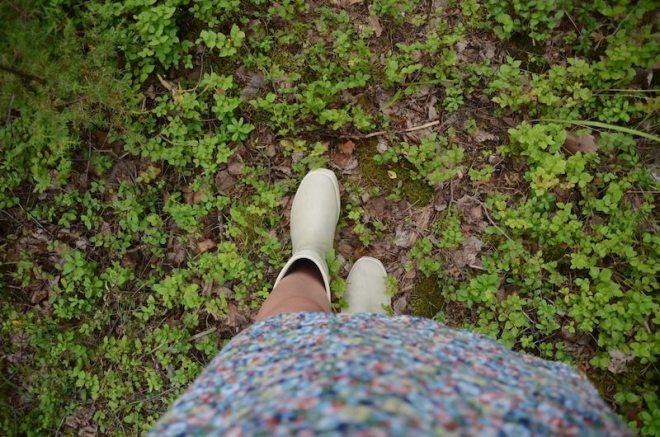 Im Blaubeerhimmelwald spazieren