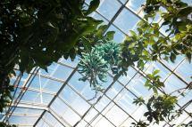 Sonne in Edinburgh - und auch im Botanischen Garten