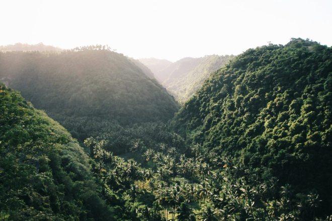 Dschungel auf Nusa Penida bei Bali