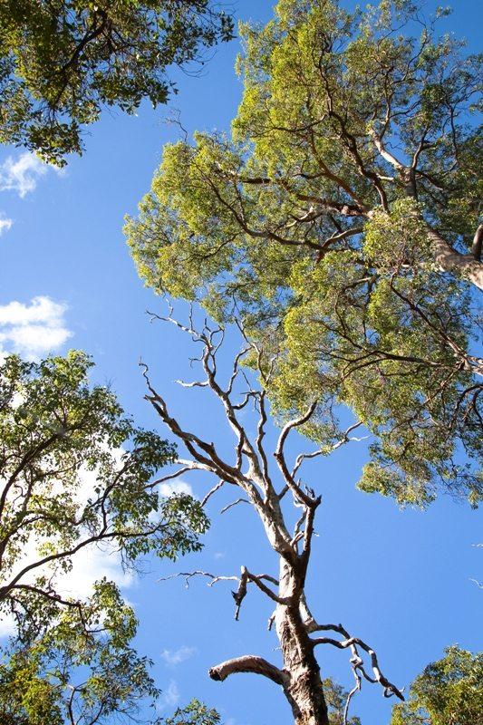 Westaustralien Roadtrip Umsonst Campingplatz Ironstone Gully Falls