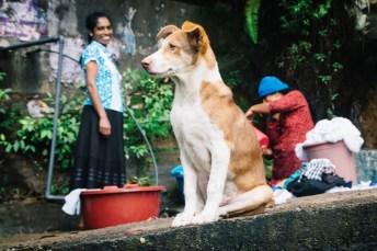 Homestay in Ella auf unserem Sri Lanka Backpacking Trip