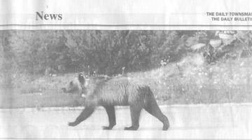 bearstreets news