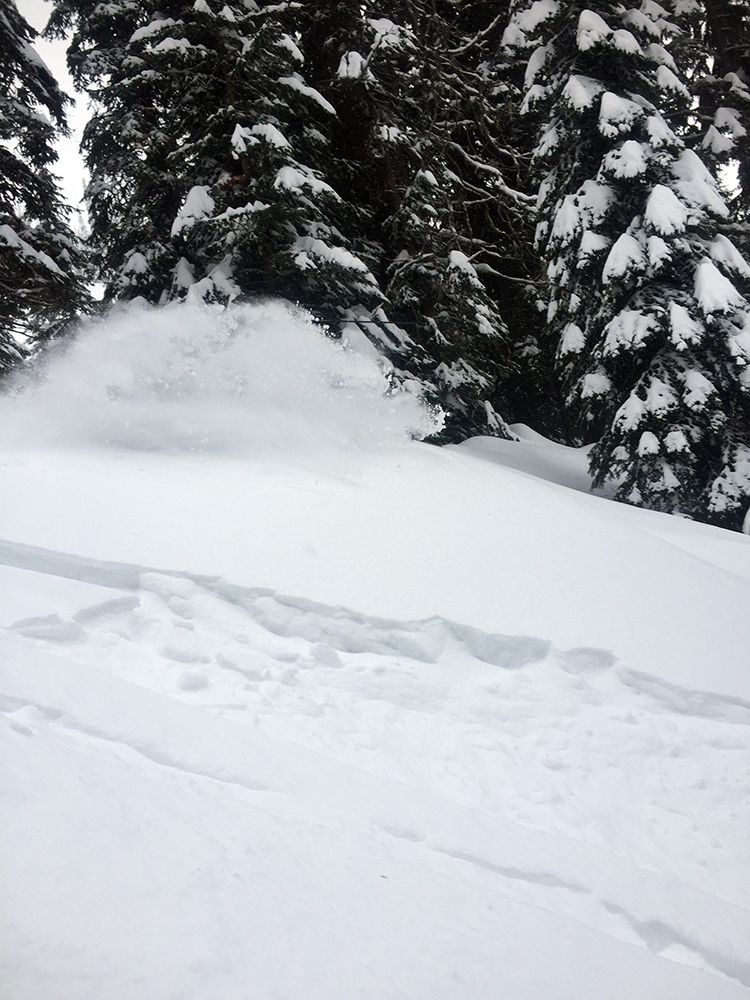 fernie ski report