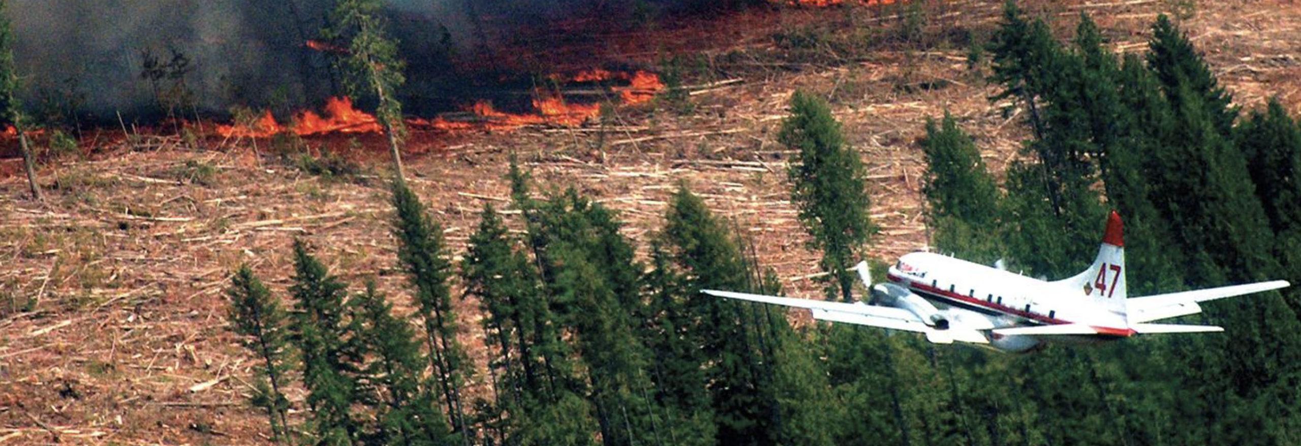 Save forests; Safe communities webinar