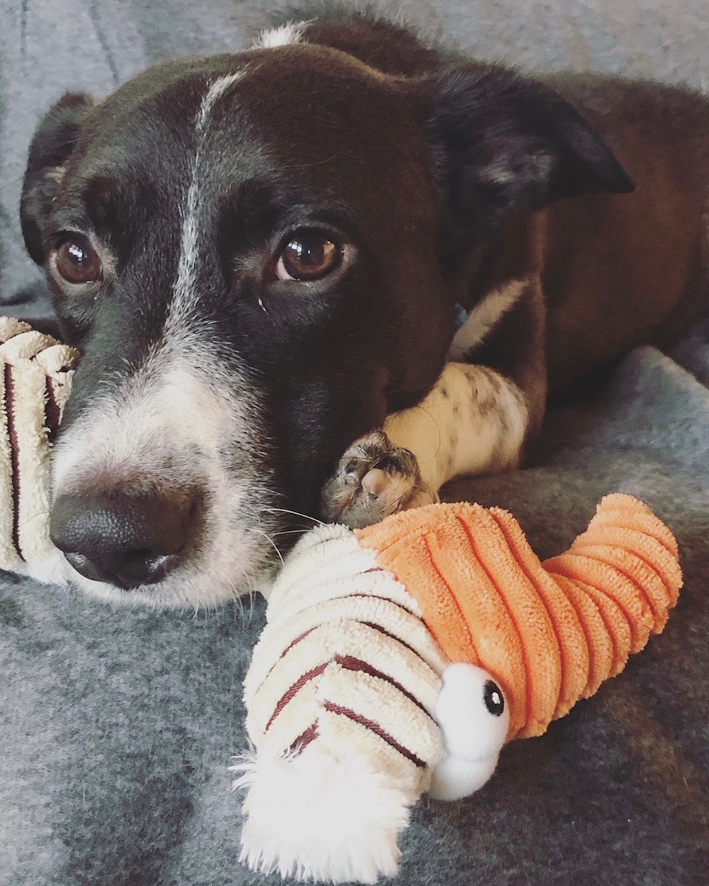 Nobby, der fernlanedog, wohnt jetzt bei uns.