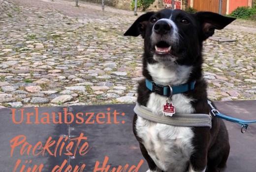 Urlaubszeit: Packliste für den Hund