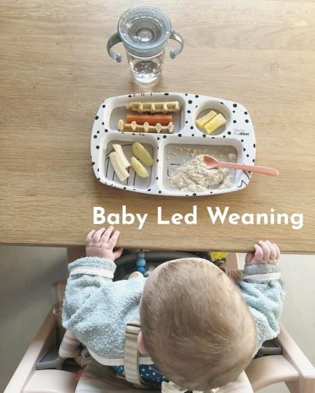 Baby Led Weaning Erfahrungen