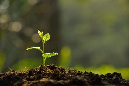 <strong>Botanik ist die Lehre der Pflanzen.</strong><br /> © amenic181 - Fotolia.com