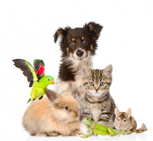<strong>Tierheilpraktiker behandeln Tiere im Krankheitsfall mit homöopathischen und pflanzlichen Mitteln.</strong><br/>© Ermolaev Alexandr - Fotolia.com