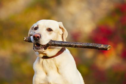 <strong>Möchten Sie ihren Hund besser verstehen?</strong><br/>© chalabala - Fotolia.com