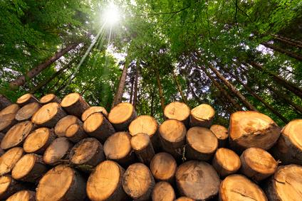 <strong>Der Wald bedeckt ungefähr ein Drittel von Deutschland.</strong><br /> © Alberto Masnovo - Fotolia.com