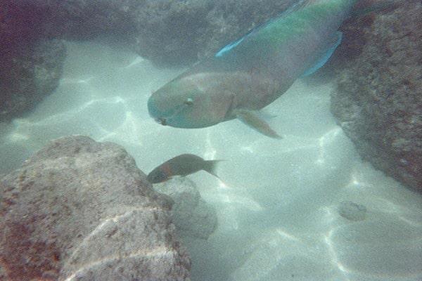 07_Fishes-Underwater-Hanauma-Bay-Oahu-Hawaii.jpg