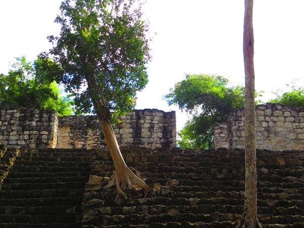 Biosphärenreservat Calakmul Mexiko Maya Hochburg Urwald Bäume