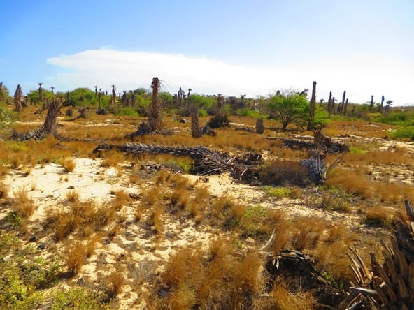 01_Palmenfriedhof-Boa-Vista-Kapverden