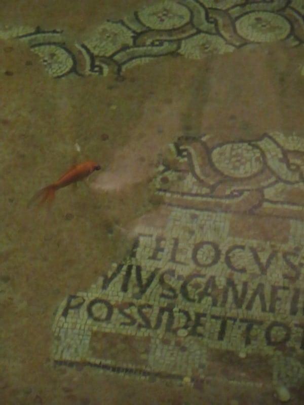 18_Gewoelbe-Pool-Fische-Mosaik-Basilika-San-Francesco-Ravenna-Italien