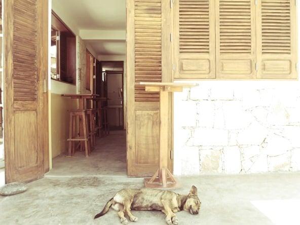 21_No-Stress-Hund-Bar-Esplanado-Fon-Banana-Velha-Boa-Vista-Kapverden