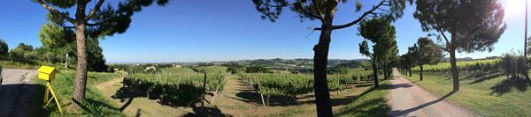 11_Weinberge-Emilia-Romagna-Italien
