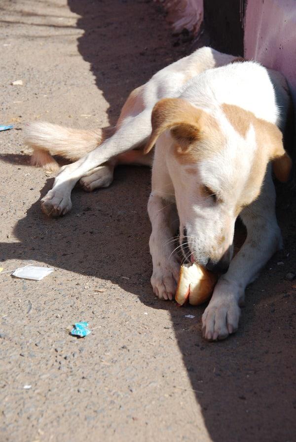 Hund in Abu Simbel Ägypten Urlaub Nilkreuzfahrt