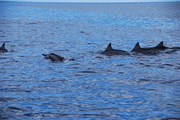 07_Delphinschulee-vor-Mauritus